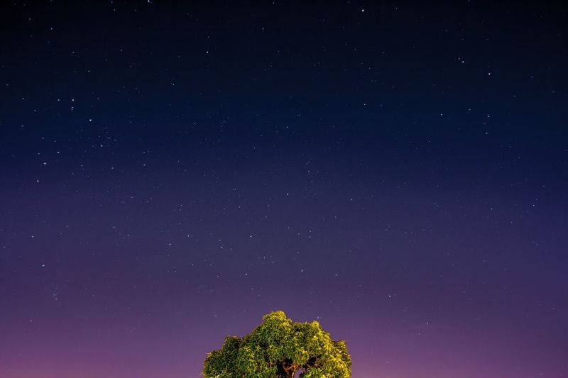 This is not a brocoli Star - Space Night Space Astronomy Sky Scenics - Nature Beauty In Nature Tree Star Field Star Tranquility Nature Space And Astronomy Tranquil Scene No People Idyllic