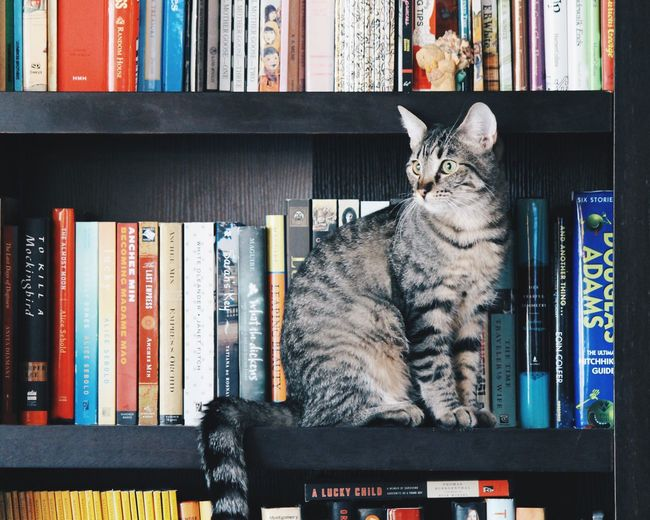 Close-up of cat sitting on book
