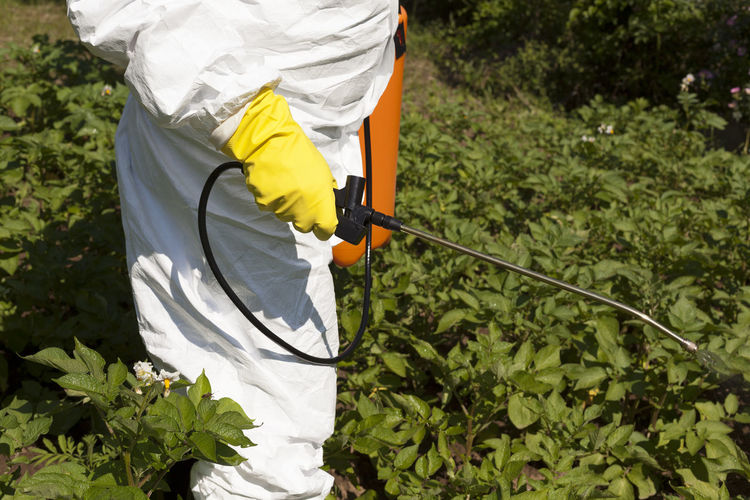 Midsection of man spraying pesticides on plants