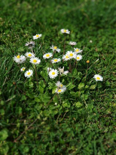 Flower Head Flower Summer Beauty Petal Flora Grass Blooming Plant Close-up