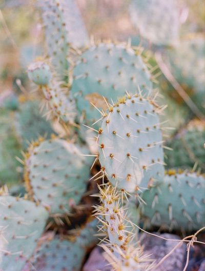 Tropea EyeEm Filmphotography Italy Calabria No People Close-up Full Frame Growth Day Nature Beauty In Nature Plant Cactus Green Color Outdoors High Angle View Focus On Foreground