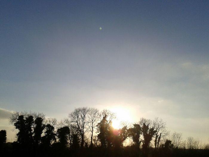 this evening's horizon Sky And Trees #horizon #amlp