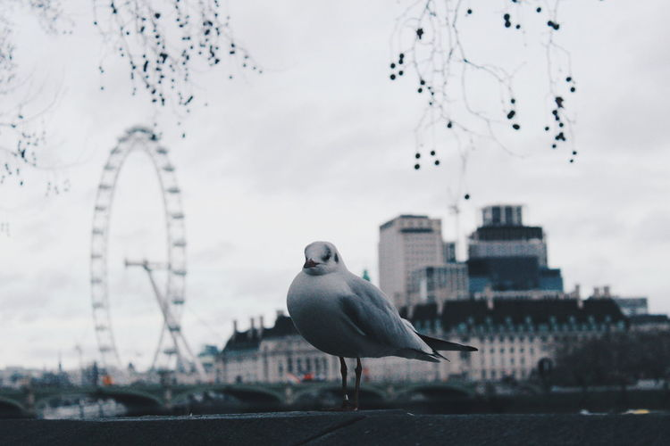 London London Eye London Tourism Destinations Seaguk Flying Flying Flock Of Birds Spread Wings Flight Sea Bird Migrating First Eyeem Photo