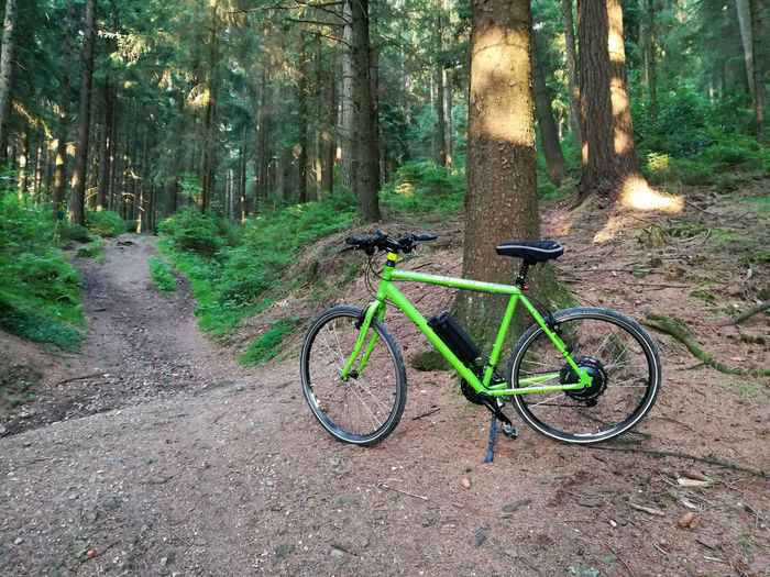 Adventure Beauty In Nature Bicycle Day E-bike Fichtenwald Forest Green Color Land Vehicle Mountain Bike Nature No People Outdoors Pedelec Radwandern Silberbach Silberbachtal Stationary Teutoburg Forest Teutoburger Wald Tranquil Scene Tranquility Transportation Tree Tree Trunk