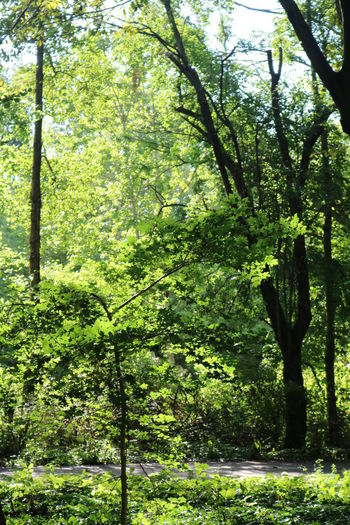 Halle (Saale) Beauty In Nature Day Forest Green Color Growth Halle (Saale) Nature No People Outdoors Peißnitzinsel Tree