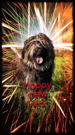 Bentjesgosaugustin Happynewyear Gos D'atura Ilovemydog Mydog I Love My Dog Dog