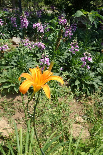 Nature Bloom