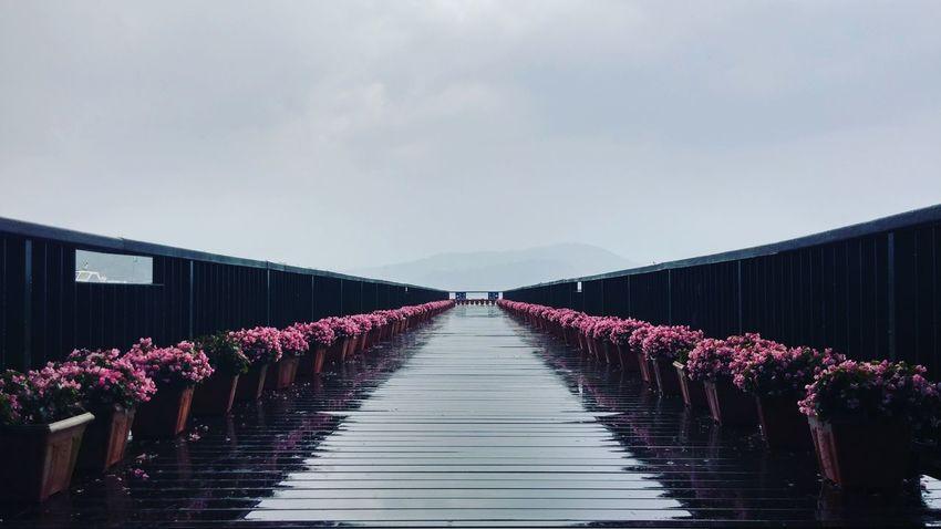 Pier Balance After The Rain Rainy Days Corridor Wooden Bridge Wodden Footbridge Flower Photography Taichung, Taiwan Taichung