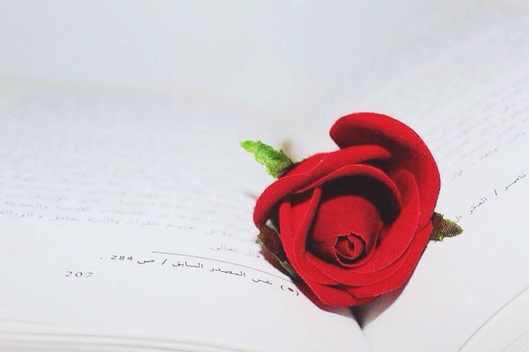 Book and flower 📚🌹