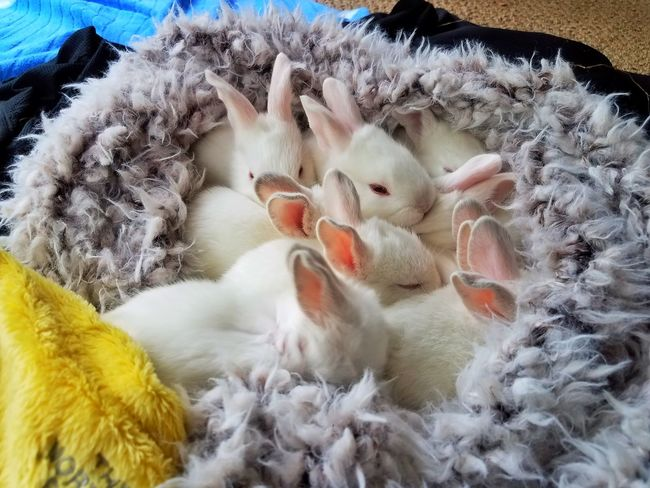 Baby Bunnies in a Scarf Always Be Cozy Cute Close-up FUNNY ANIMALS Bunnies Baby Bunnies Rabbits Bunny Rabbits Cute Pets SnuggleBuddies Snuggles Cuddles Cozy Sweater Cozy