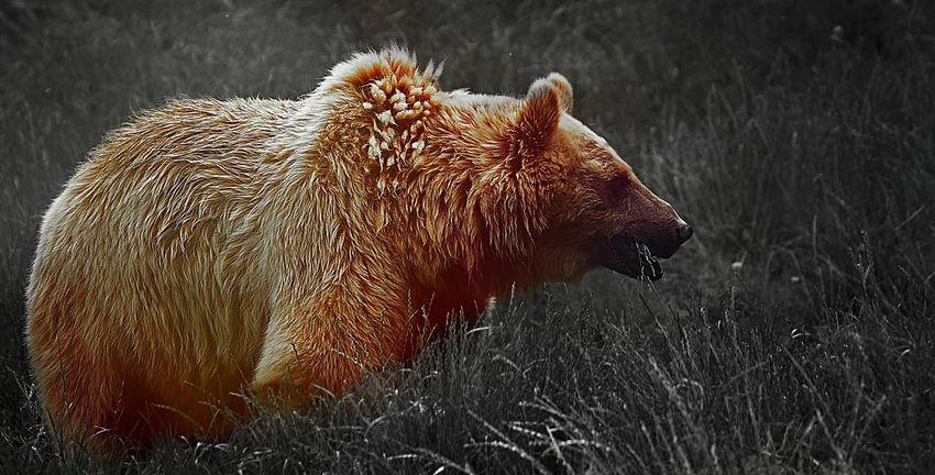 Animal Animal Themes Animals In The Wild No People Animal Wildlife One Animal Nature Outdoors Side View Day