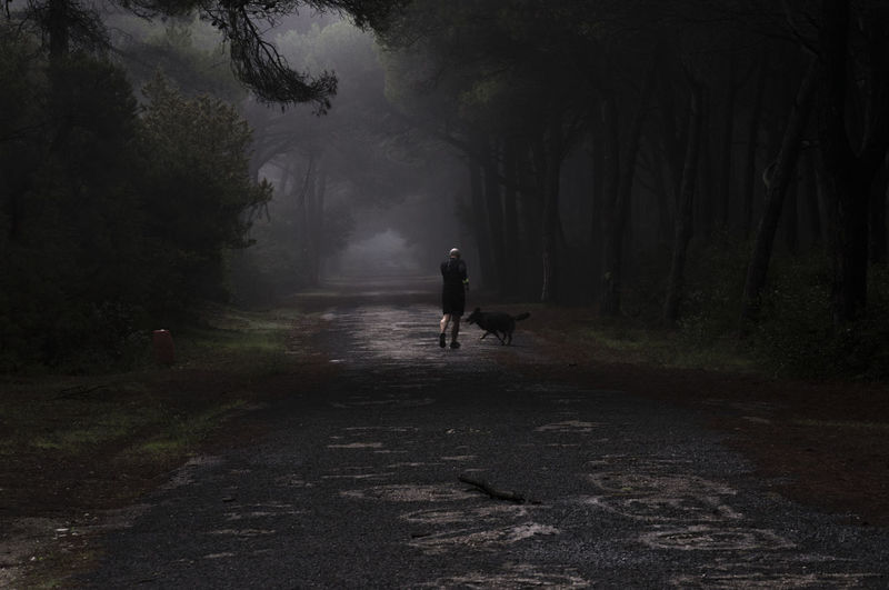 Rear view of woman with dog walking on road in forest