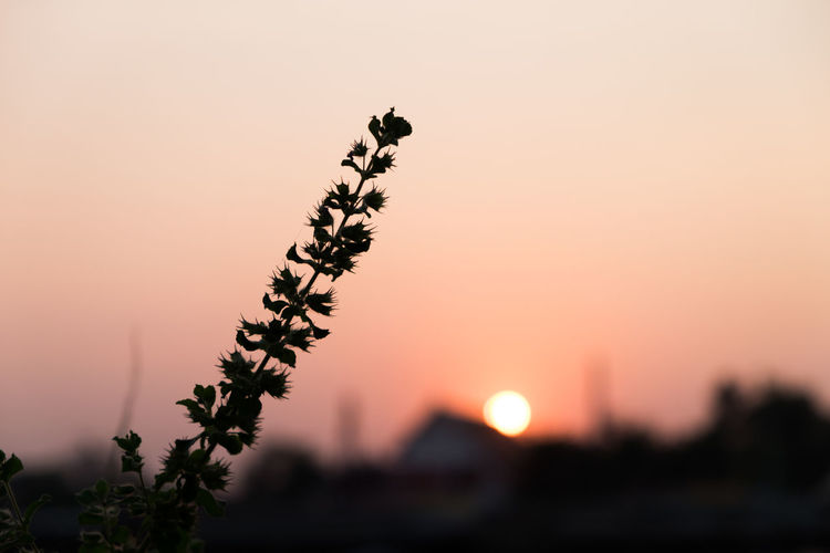 Close-up of silhouette plant against clear sky during sunset