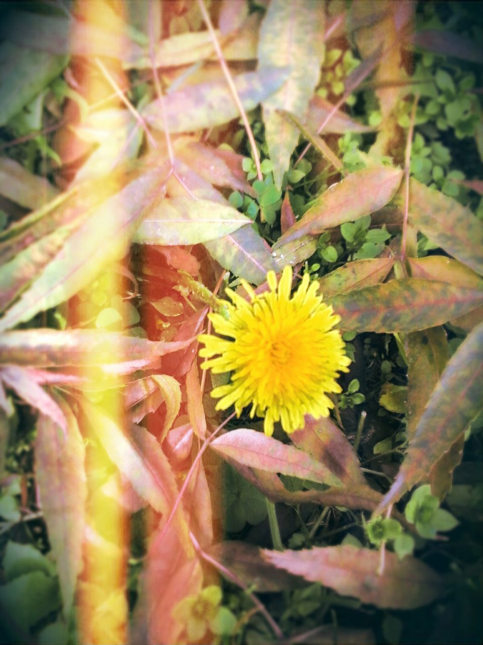 flower, plant, growth, nature, beauty in nature, fragility, no people, leaf, freshness, petal, flower head, close-up, outdoors, day