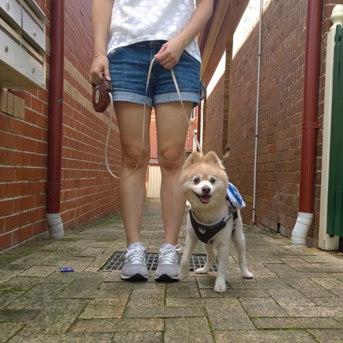 Low Section Of Woman With Dog Standing In Alley