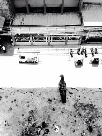 ALONE. Eyeem Philippines EyeEmCDO Faces Of EyeEm EyeEm Best Shots Blackandwhitephotography MJBRPhotography