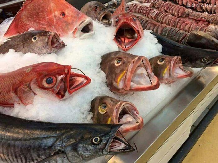 Iloilo Fish Choir Fish Fish Market Choir  Fish Choir Supermarket Wet Section Grocery Store Fishes