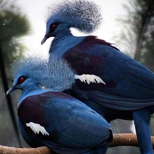 I Believe I Can Fly.. Birdpark Baliisland INDONESIA VSCO Vscocam