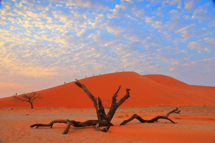 Cloud Deadvlei Desert Dune 45 Namibia Landscape Sossusvlei Tree Sand Sky Sunrise