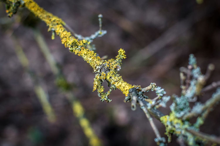 Stick Ice Fragility Twig Tranquility Frozen Outdoors Tree Branch Cold Temperature Lichen Winter Selective Focus Growth Nature Focus On Foreground Close-up Beauty In Nature Plant Forgotten Day No People Snow