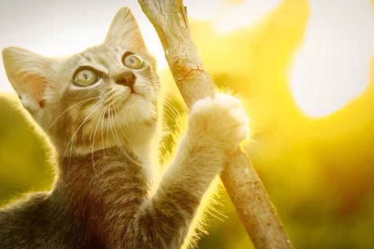 Domestic Cat Animal Themes Whisker Pets
