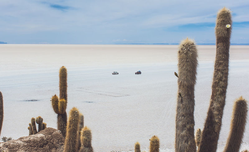 Isla Incahuasi - The Bolivian Salt Flats Beauty In Nature Cacti Cactus Cactus Cloud Cloud - Sky Coastline Day Horizon Over Water Isla Incahuasi Nature Non-urban Scene Ocean Outdoors Plant Remote Scenics Sea Seascape Shore Sky Solitude Tranquil Scene Tranquility The Drive