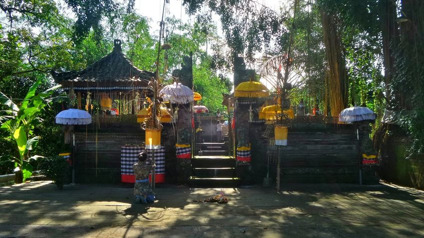 Bali Bali Indonesia Island Islandlife Offering Priest Temple, Ritual Ubud
