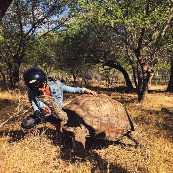 Safari Safari Animals Animals Turtle Giantturtle Pet Whild Whildlife Savannah Mauritius Love Animal Themes Animal Photography Freedom Freedom Mauritius Island  Mauritius Beauty