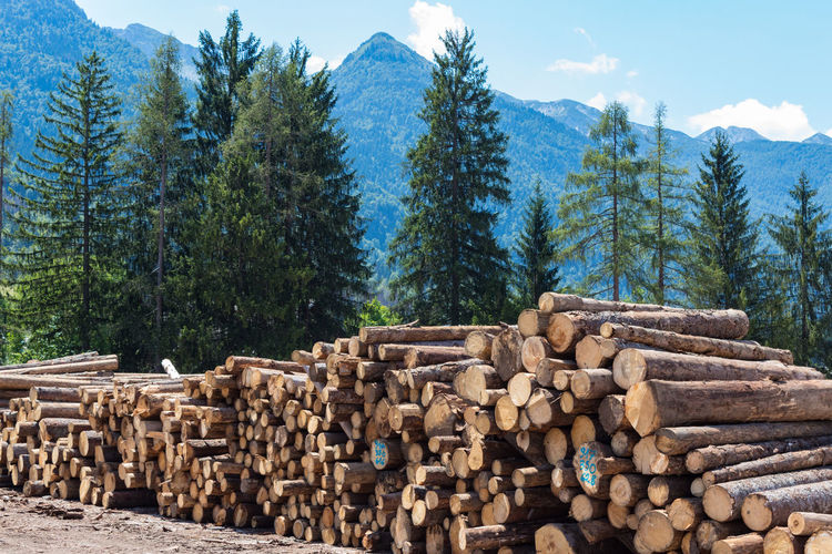 Slovenia Abundance Day Deforestation Europe Forestry Industry Heap Large Group Of Objects Log Lumber Industry Mountain Nature No People Outdoors Pile Sky Stack Timber Tree Trunk Wood - Material Woodpile