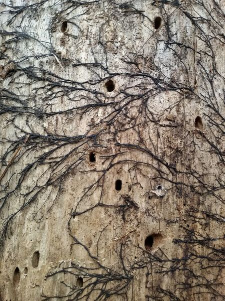 Detail of rotten tree holes. Tree Detail Holes Dried Rotten Liquen Plants Parasites Nature Macro Close Up Wood Forest Texture