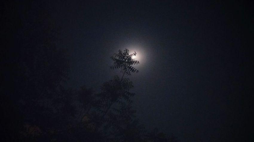 Behind the tree Moon Leaves Nightphotography Night Ssclickx Ssclix SSClicks SSClickPics SSClickpix Mobilephotography EyeEm Selects Tree Sky Full Moon Moonlight