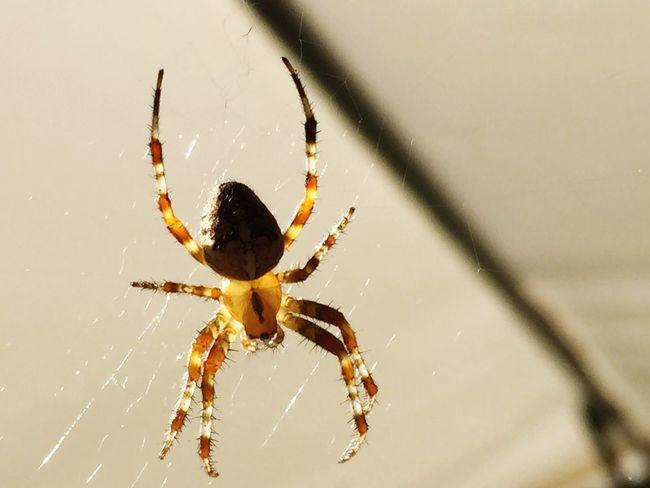 Nature Spider Peter Wernqvist Wernqvist