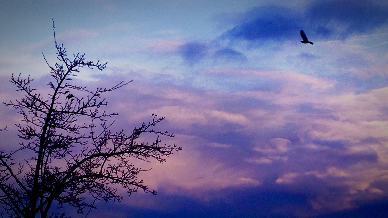 flying, sky, bird, animals in the wild, animal themes, cloud - sky, low angle view, nature, mid-air, one animal, wildlife, beauty in nature, silhouette, outdoors, sunset, no people, animal wildlife, scenics, spread wings, day, tree