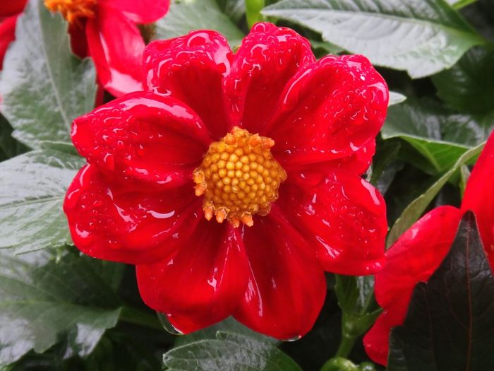 As The Rain Falls Caught In The Rain Rain Flowers,Plants & Garden