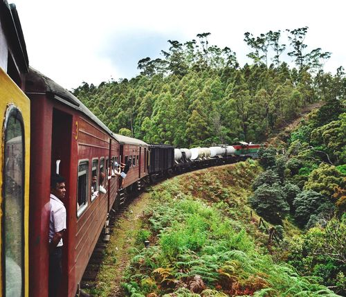 Train trip from Kandy to Ella, Sri Lanka, aprile 2016 Adapted To The City Sri Lanka Train Trip Road Nature Travel East Ella Wild Tree Forest Amazing View Amazing_captures Amazing Nature