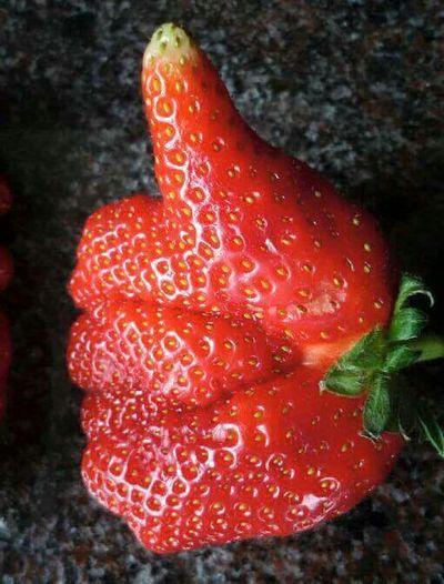 LIKE this Strawberry. Facebook Like Strawberry Strawberries Fruit Erdbeere Fraise Fragola Fresa Morango