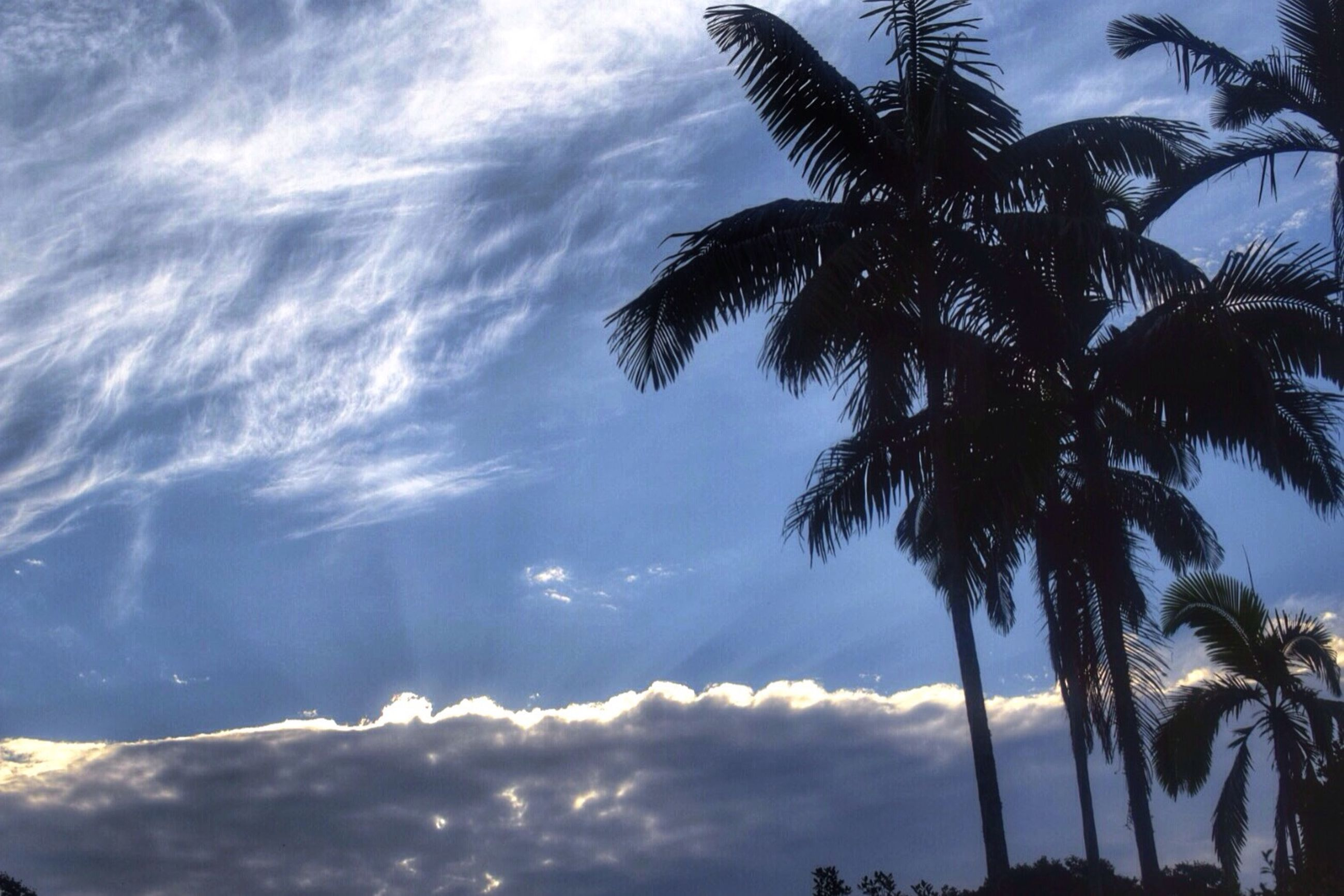 palm tree, low angle view, sky, tree, cloud - sky, tranquility, growth, beauty in nature, nature, scenics, cloudy, silhouette, tranquil scene, cloud, tree trunk, palm leaf, branch, outdoors, no people, coconut palm tree
