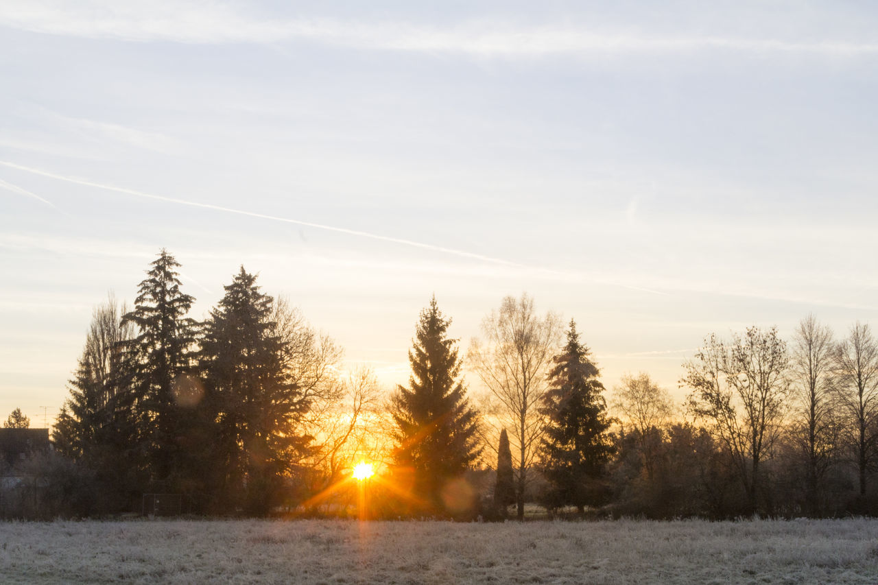 nature, beauty in nature, winter, scenics, no people, snow, sun, tranquil scene, cold temperature, tranquility, sunlight, tree, sky, landscape, sunset, outdoors, day, vapor trail