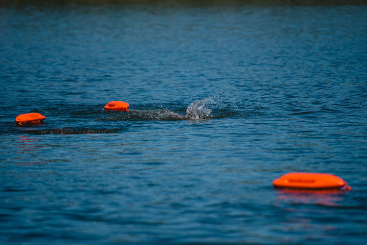 Water Waterfront Sea Orange Color Swimming Day Buoy Blue Nature Floating On Water Floating Rippled No People Selective Focus Beauty In Nature Outdoors Animal Scenics - Nature Sport