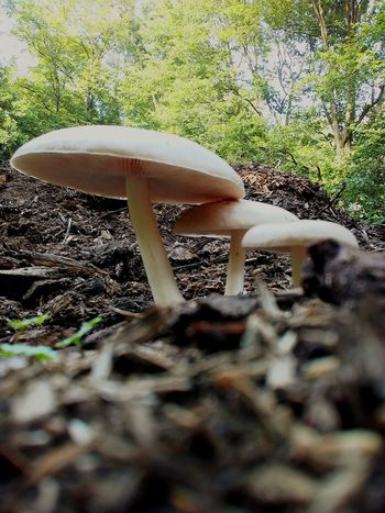 Up Close And Personal With Nature Fungus Off The Beaten Path Picturejunkie Eyemnaturelover Check This Out OpenEdit Pretty♡