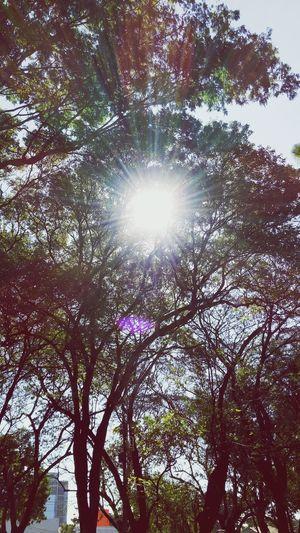 EyeEm Nature Lover Hello World Treescollection Beautiful Sunset Resplandor Enjoying The Sun Paraguay-Asuncion Beautiful Nature EyeEm Best Shots Sunshine 🌞🌱🌳🌄