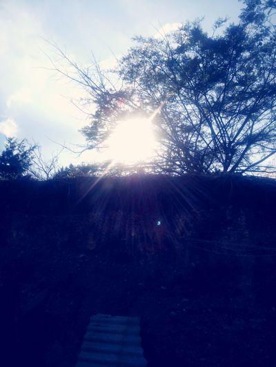 Forest Etemenanki Carpe Diem