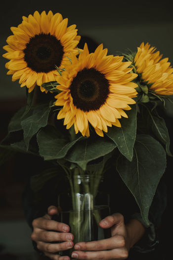 Beauty In Nature Close-up Drink Flower Flower Arrangement Flower Head Flowering Plant Fragility Freshness Glass Growth Inflorescence Leaf Nature One Person Outdoors Petal Plant Plant Part Pollen Refreshment Sunflower Vulnerability  Yellow