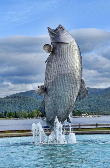 Campbellton Cloud - Sky EyeEmNewHere Fish Fishing Leaping New Brunswick, Canada Outdoors Salmon Water World Largest Salmon