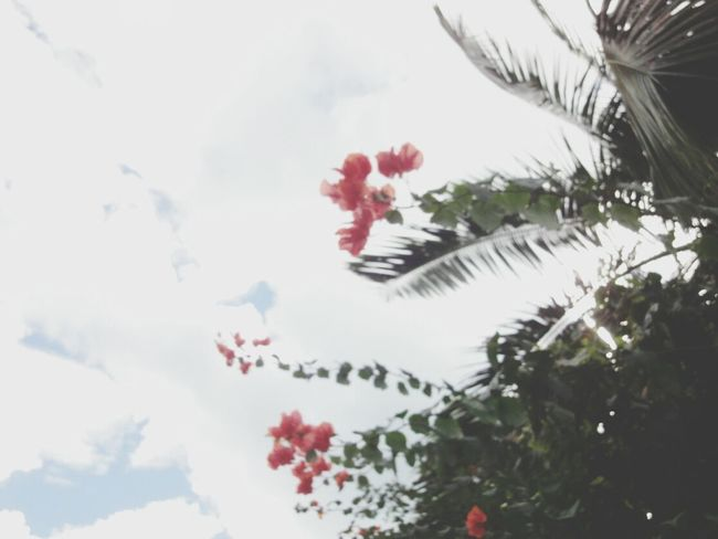 Fiji Photos Taking Photos Flowerporn EyeEm Nature Lover Eye4photography