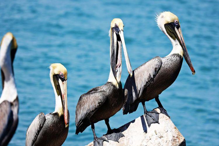 Flock of birds on rock by sea