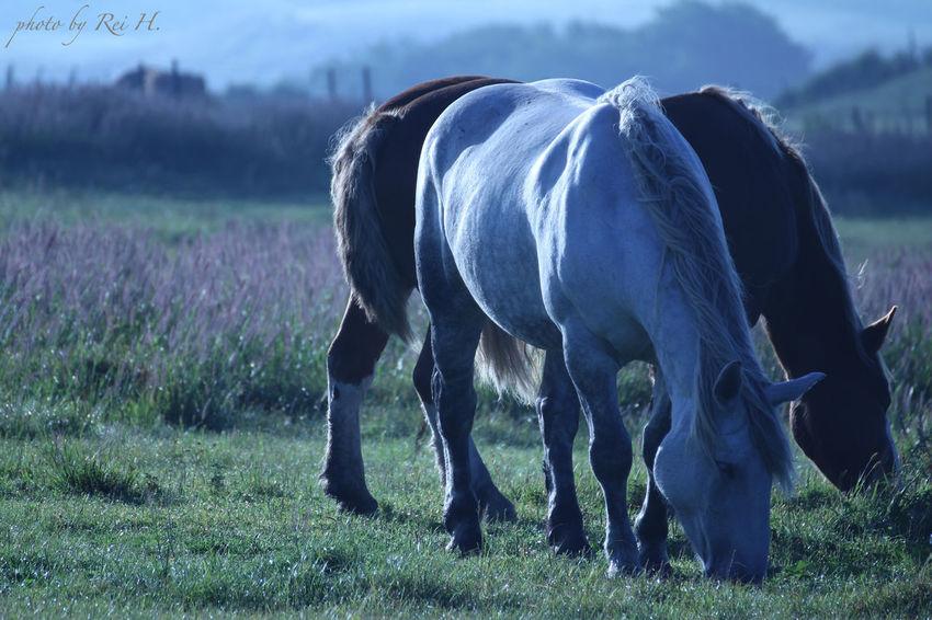 GRAZING 馬 熊本 阿蘇 タムロン Horse Kumamoto Aso Telephoto EyeEm Nature Lover Canon