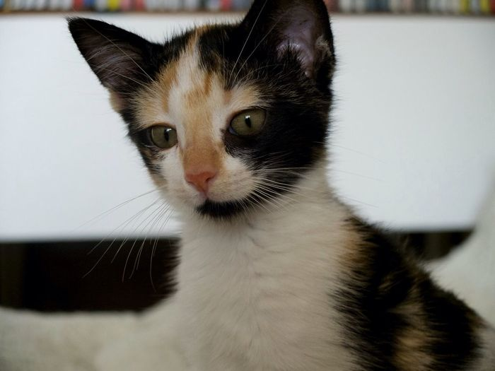Gaïz Cat