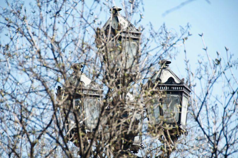 Streetlights Old Street Light Mourning Dove Perching Tree Branch Bare Tree Vulture White Stork Stork