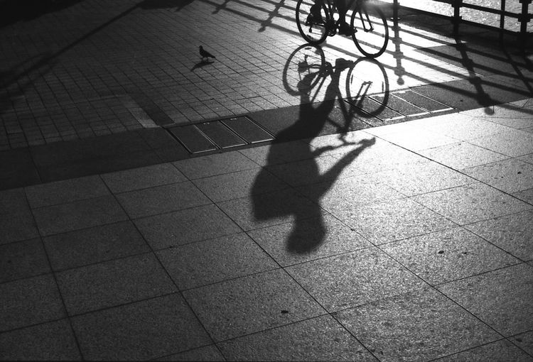 the pigeon and the cyclist Cyclistshadow Streetphotography Sunset Blackandwhite City Life Shadow Sunlight Film Cyclist Monochrome Fuji Summarit5cm Acros100 Focus On Shadow Showcase April